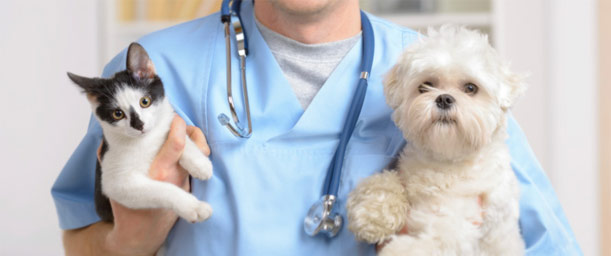 Esterilización pediátrica en mascotas