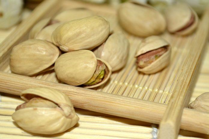 plantar y cuidar pistachos