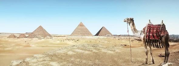 camello en egipto