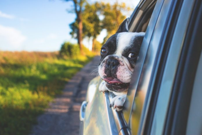 quitar el olor a perro del coche